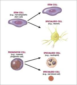 Cellular development